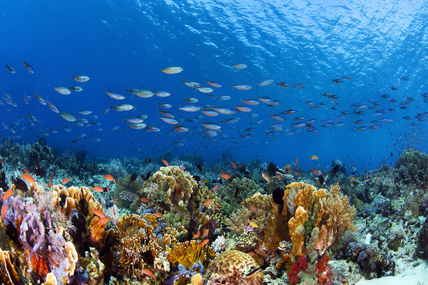 In 10 jaar tijd is een zesde van de koraalriffen in de wereld verdwenen