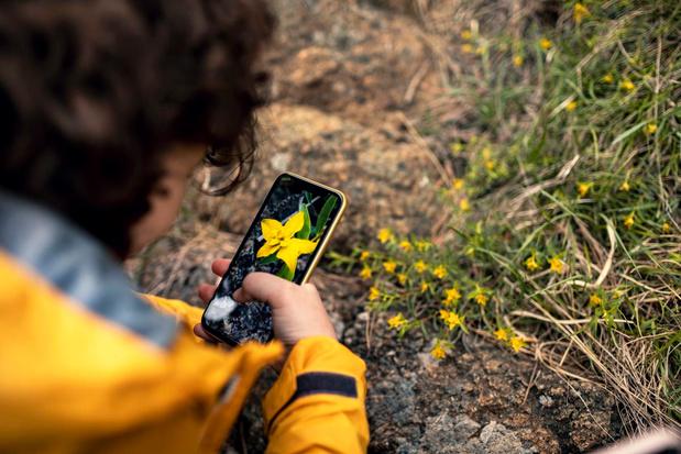ObsIdentify: een natuurencyclopedie in je broekzak