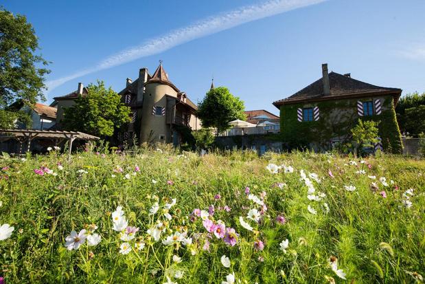 Lausanne, région viticole au bord du lac Léman