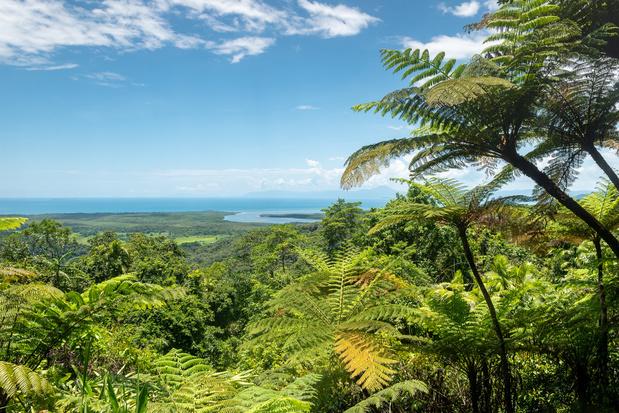 Australische Daintree regenwoud teruggegeven aan de oorspronkelijke Aboriginal bevolking
