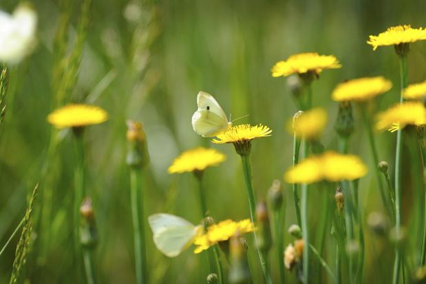 Negen dingen die we allemaal kunnen doen om de insecten te redden