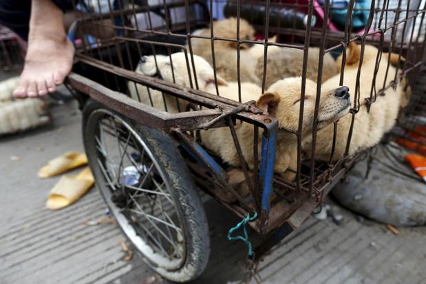 Chinese stad Shenzhen verbiedt het eten van honden en katten