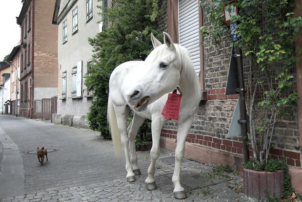 Deze merrie maakt iedere dag een wandeling door Frankfurt