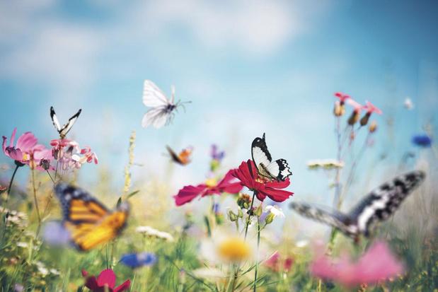 Green Deal voor biodiversiteit bij bedrijven