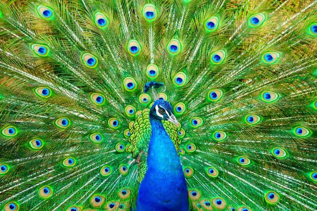 'Waarvoor dienen al die kleuren in de natuur?'