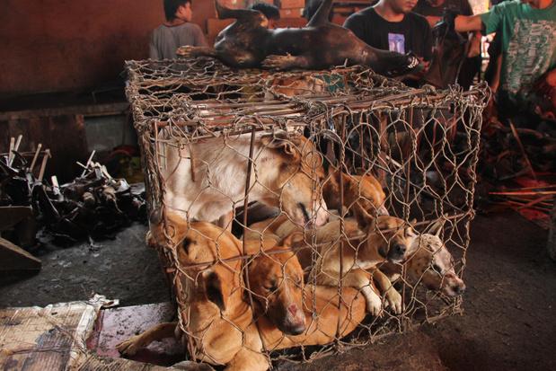 China wil eten van honden en katten verbieden