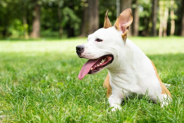 Discussie met buren over blaffende hond eindigt in vernielingen en slagen