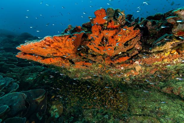 Wetenschappers slaan alarm: ongekend hoge kwikniveaus diep in de Stille Oceaan