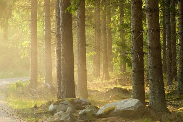 Tiny Forests moeten snel overal natuur op wandelafstand brengen