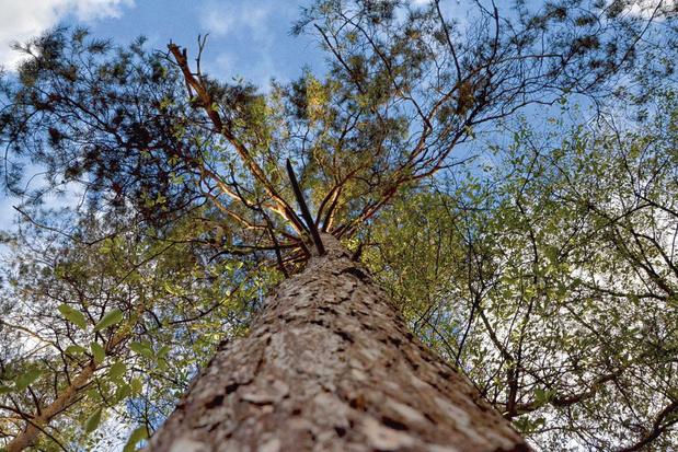 Biodiversité: comment sauver la forêt wallonne?