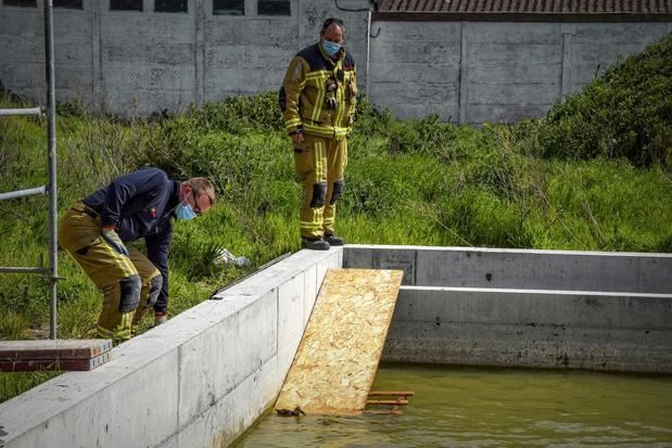 Brandweer redt hulpeloze eendjes uit zwembad