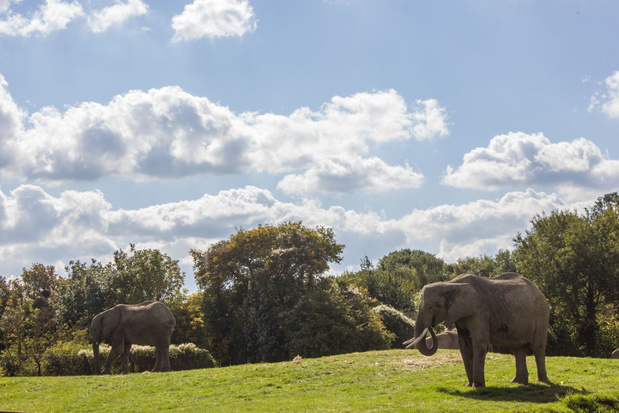 Voor het eerst wordt een kudde olifanten geboren in gevangenschap vrijgelaten in de Keniaanse natuur