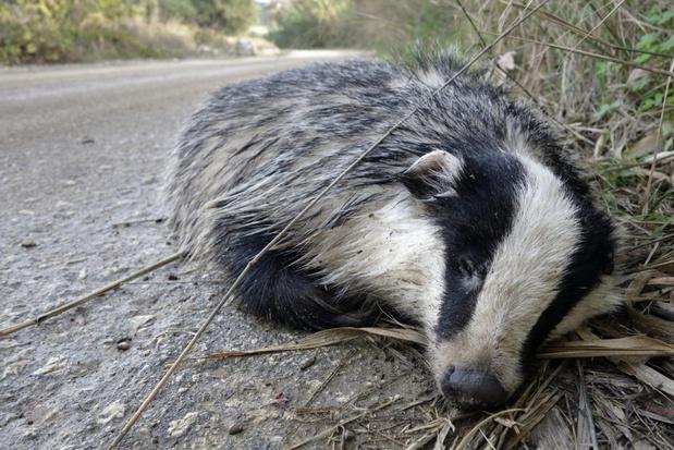 Pak minder aanrijdingen met wilde dieren dankzij lockdown