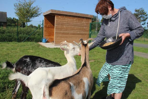 Verwaarloosde geitjes helpen patiënten in Heilig Hart in Ieper