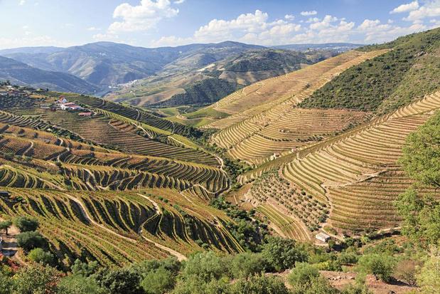 'Wines of altitude': waarom bergwijnen steeds meer in trek zijn