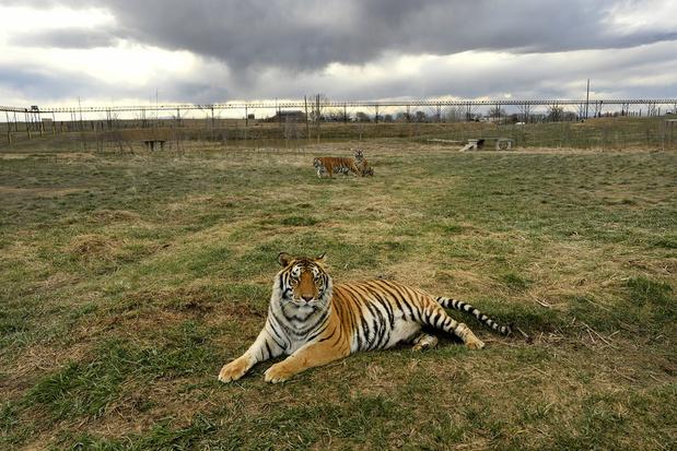 Tientallen katachtigen in beslag genomen bij zakenman bekend van Netflixhit 'Tiger King'