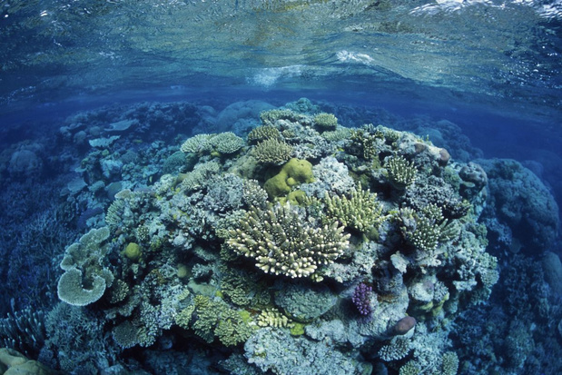 Australië wil tonen dat Great Barrier Reef niet is bedreigd door er met diplomaten te snorkelen