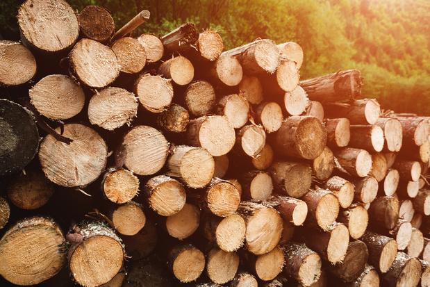 Aardolie vervangen door hout leidt tot duurzamere producten