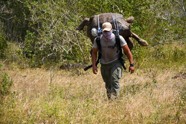 Reuzenschildpad Diego redde zijn soort en keert nu terug naar Galapagoseilanden