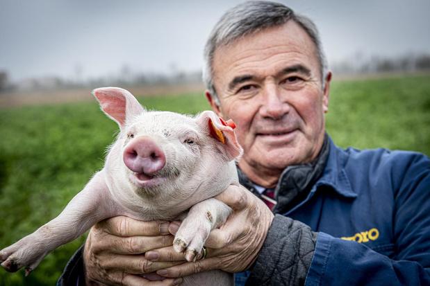 """Hendrik Verkest, 30 jaar na de varkenspest:""""Politiek succes mee te danken aan de varkenspest"""""""