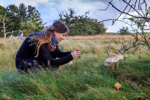 Vier de herfst op de Veluwe
