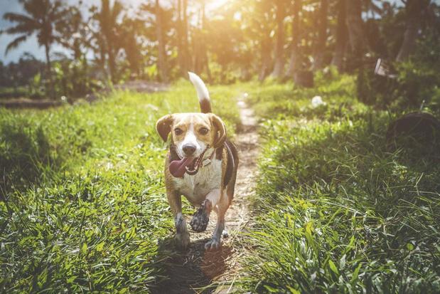 Dienstenplatform voor honden breidt zich uit