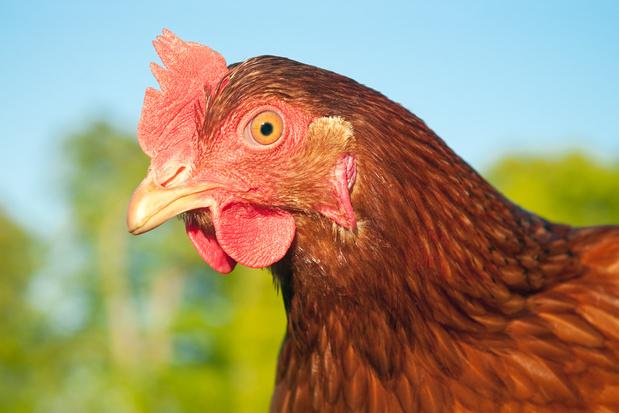 'Ik zal nooit meer een kipfiletje bakken zonder aan dino's te denken'