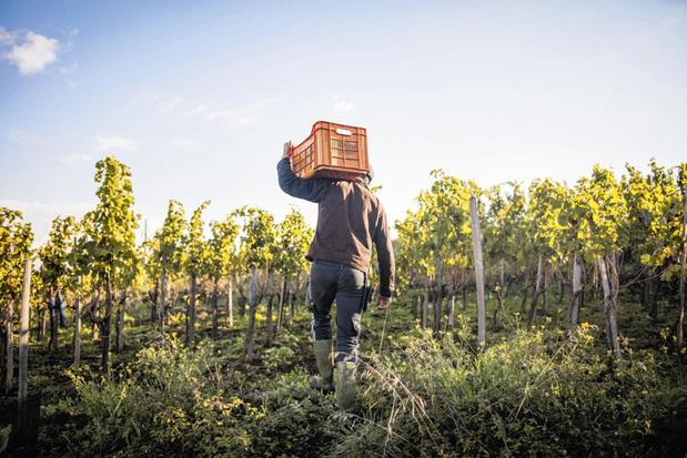 Van Sicilië tot Nieuw-Zeeland: zijn wijnen van eilanden beter?