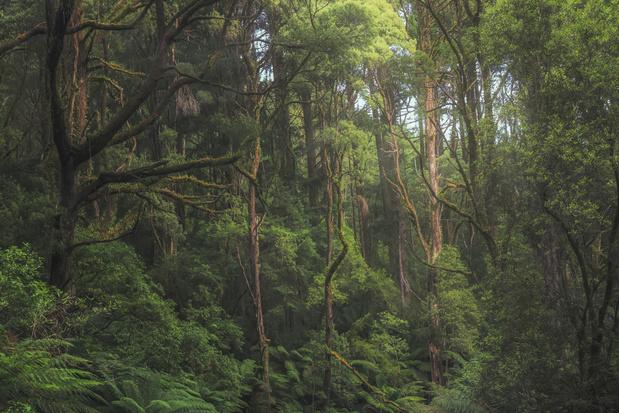 Zeker een derde van de boomsoorten in de wereld met uitsterven bedreigd