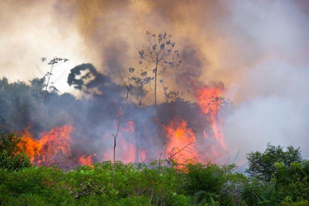 Delen van het Amazonewoud stoten meer CO2 uit dan ze opnemen
