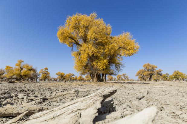 Droogte, virussen en nieuwe wegen zijn grootste bedreiging voor bossen