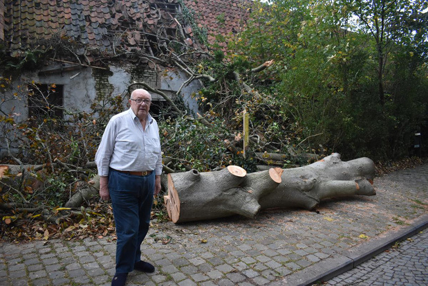 Gaston is blij dat hij nog leeft nadat grote boom omwaait op zijn auto