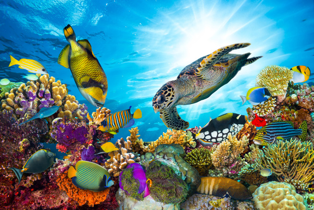 Maak samen met Sir David Attenborough een virtuele reis door het Great Barrier Reef