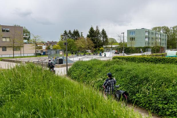 Het nieuwe grasplan van Antwerpen: 'Extensief grasbeheer is 3 keer goedkoper'