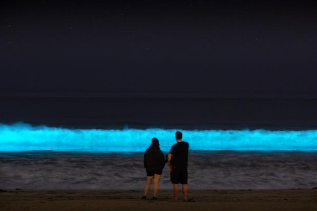 Bijzondere beelden: dolfijnen in door bioluminescentie blauw oplichtende oceaan in Californië