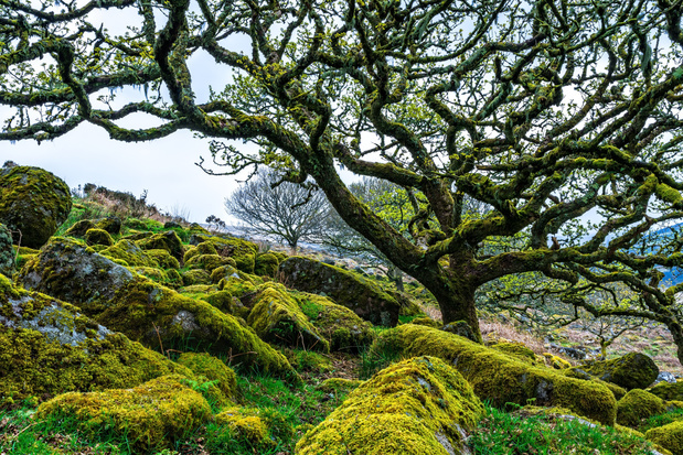 'Ik vind geen zuurstof of nederigheid in het bos, maar een aangenaam, veilig soort opwinding'
