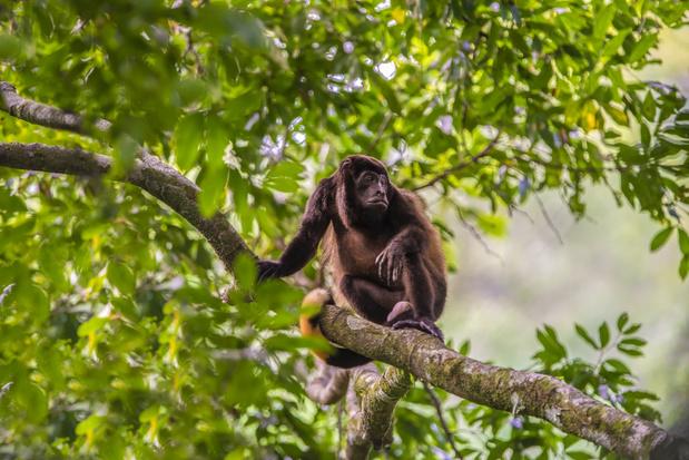 Opinie: Costa Rica en Oeganda tonen hoe we zesde massa-uitsterving kunnen vermijden