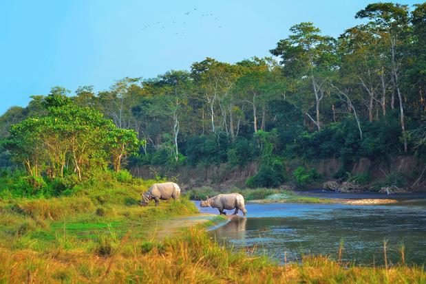 Klimaatverandering dreigt succesverhaal Nepalese neushoorn te vergallen