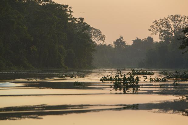 Regenwoud moet wijken voor cocaïneproductie in Colombia