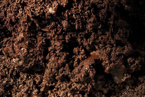 Een boon voor chocolade: 'Weinig mensen kennen de ware geur van chocolade'