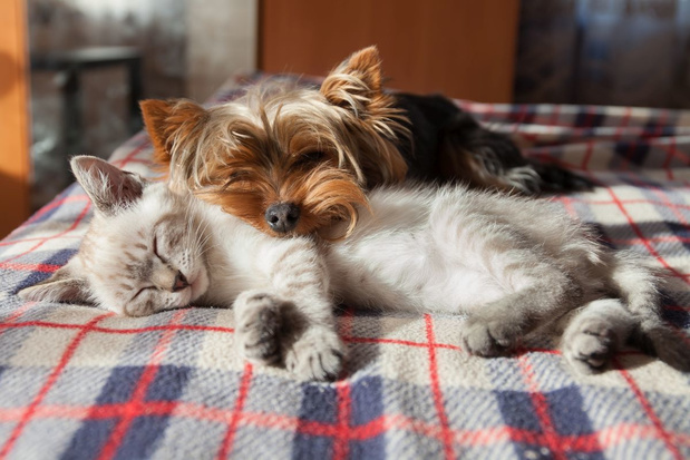 Zuid-Korea lanceert gratis covid-19-test voor honden en katten