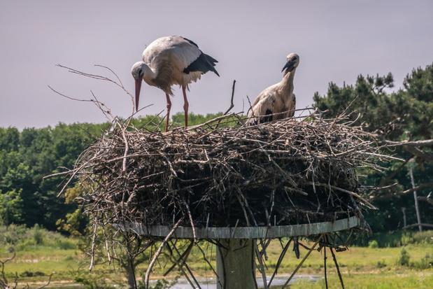 Opnieuw vogels geringd in het Zwin voor wetenschappelijk onderzoek