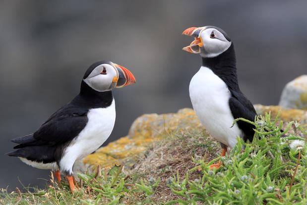 Zo doen vogels dat: een nieuwe kijk op het praten, werken, spelen, opvoeden en denken van vogels