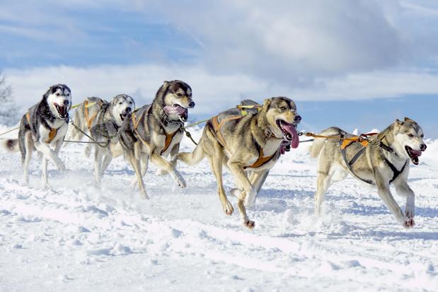 In de prehistorie bestonden er al vijf hondenrassen