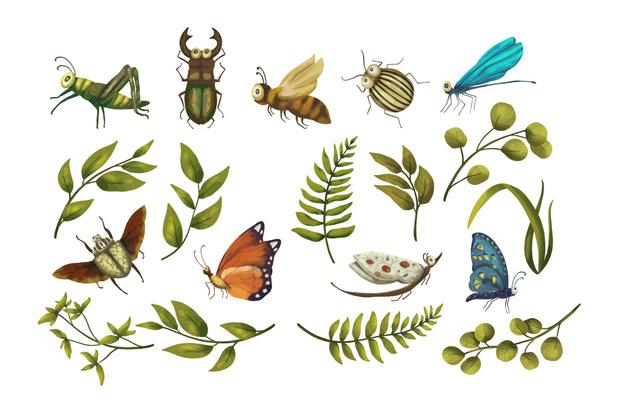 Terugval aantal insecten minder dramatisch en genuanceerder dan gedacht