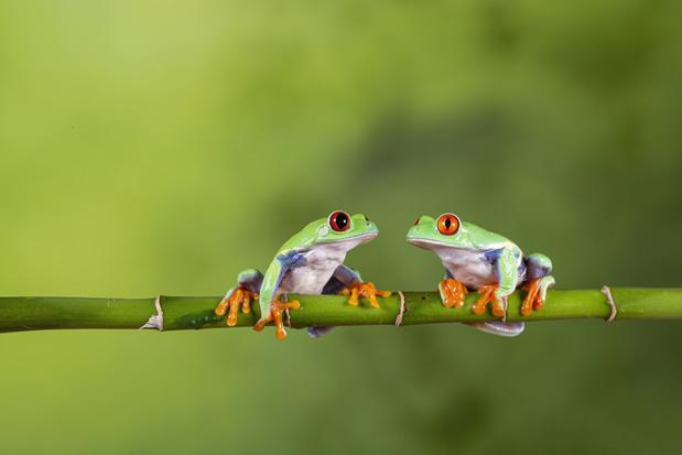 Gevaren voor de biodiversiteit: amfibieën verkeren in grootste gevaar, landbouw de belangrijkste oorzaak