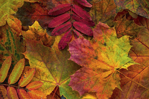 Dossier spécial escapades: évadez-vous cet automne!