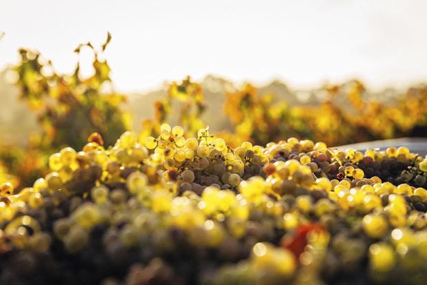 Slow wine: traag en geduldig gemaakt, zoals vroeger