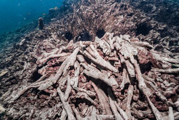 VN bezorgd over forse toename van 'dode zones' in oceanen