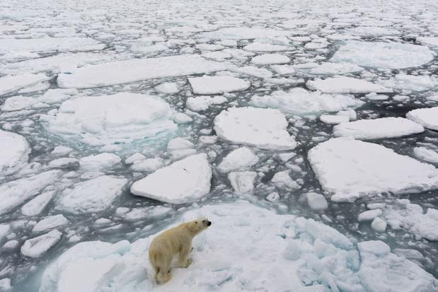 Laatste toevluchtsoord ijsbeer verdwijnt als sneeuw voor de zon